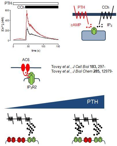 cwt-PTH SignallingV4