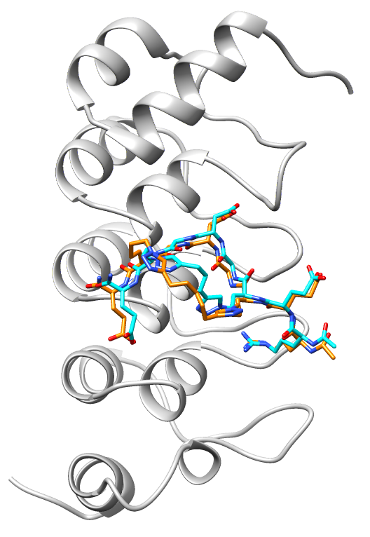 TNKS2 ARC4 bound to stapled peptides