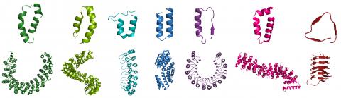 HEAT, TALE, Ankyrin, TPR, Armadillo, β-helix