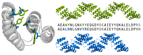 Four amino acid substitutions change the superhelical geometry